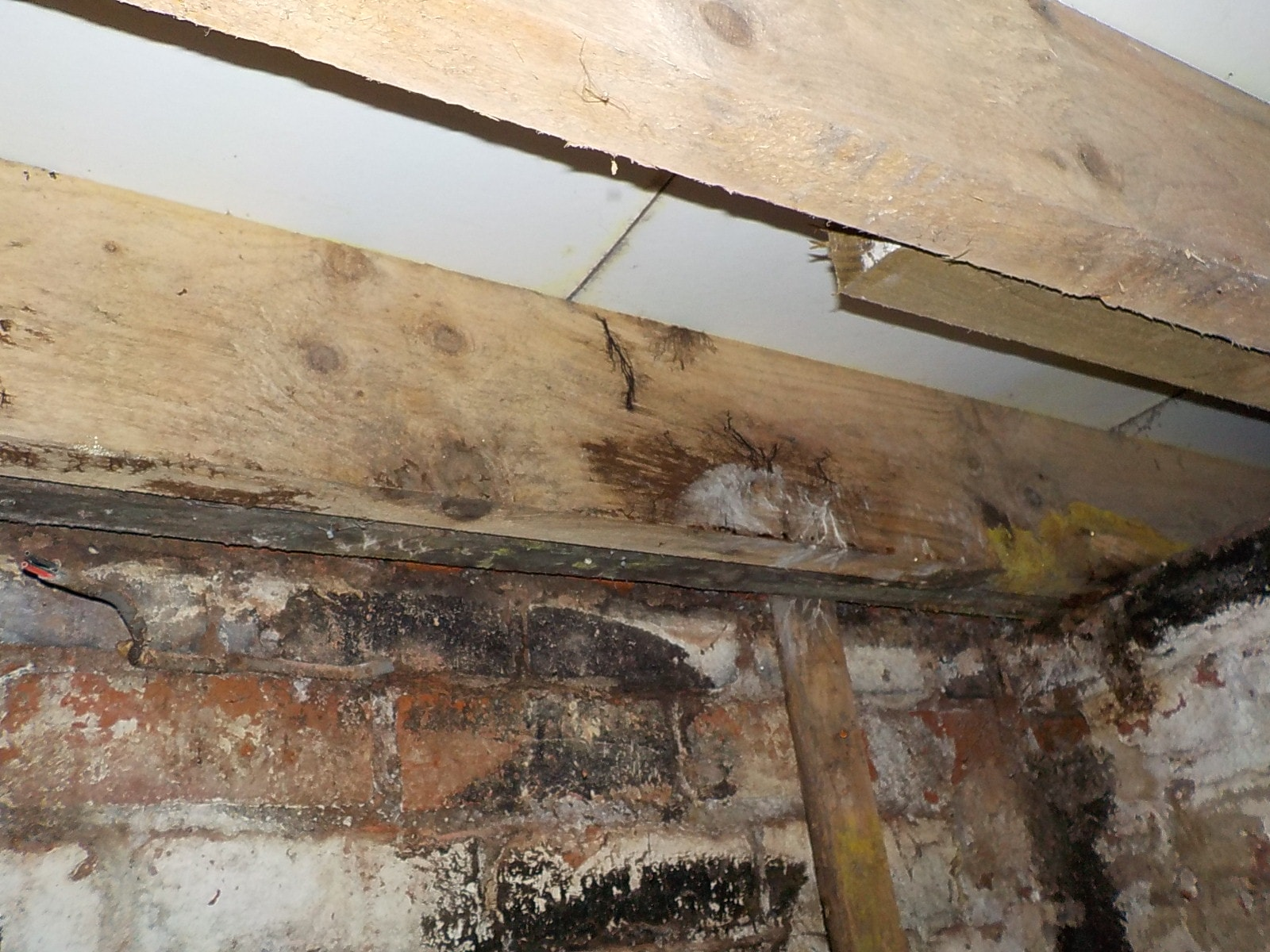 Wet rot on a joist